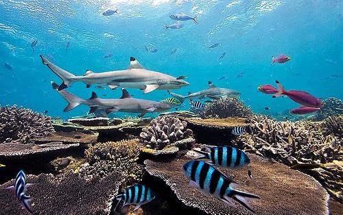 Водный мир Коста-Рики