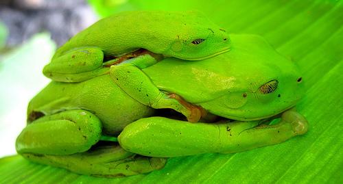 Экзотический мир Коста-Рики